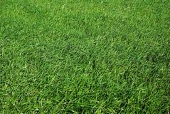 Grüne Rasenfläche stockfotografie