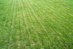 Grüne Rasenfläche Lizenzfreie Stockfotografie