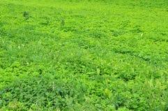 Grüne Rasenfläche Stockfotos