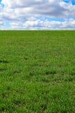 Grüne Rasenfläche lizenzfreie stockfotos