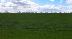 Grüne Rasenfläche lizenzfreies stockbild