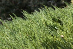Grüne Rasenfläche Stockbilder