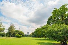 Grüne Rasenfläche im Großstadtpark Lizenzfreies Stockbild