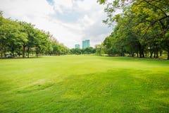 Grüne Rasenfläche im Großstadtpark Lizenzfreie Stockfotos