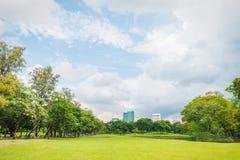 Grüne Rasenfläche im Großstadtpark Stockbilder
