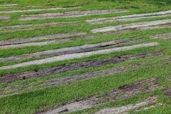 Grüne Rasenfläche und hölzerne gehende Bahn Stockfotografie