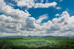 Grüne Rasenfläche-Wiese mit Holz und Berg unter blauem Himmel Stockfotografie