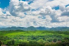 Grüne Rasenfläche-Wiese mit Holz und Berg unter blauem Himmel Stockbild