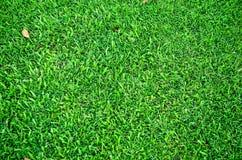 Grüne Rasenflächenaturwiese Lizenzfreies Stockbild