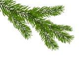 Grüne, realistische Niederlassung der Tanne Tannenzweige auf Vektorillustration der weißen Weihnacht Lizenzfreie Stockfotos