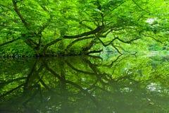 Grüne Reflexion Stockbild