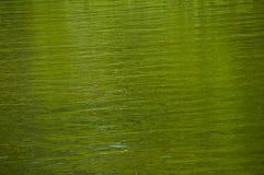 Grüne Reflexionen im Wasser Lizenzfreie Stockbilder