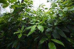 Grüne regnerische nass Blatt-Natur stockbild