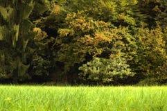 Grüne reiche Vegetation Lizenzfreies Stockbild