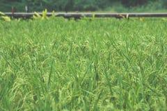 Grüne Reisfelder in Mae Jun, Chiang Rai, Thailand Lizenzfreie Stockbilder