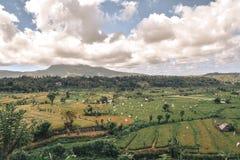 Grüne Reisfelder mit Flaggenvogelscheuchen mit einem Berg in einem Hintergrund in Bali lizenzfreie stockfotos