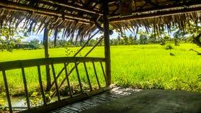 Grüne Reispaddys auf der Straße stockbild