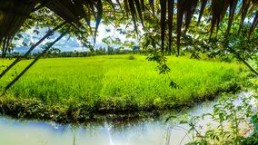 Grüne Reispaddys auf der Straße lizenzfreies stockbild