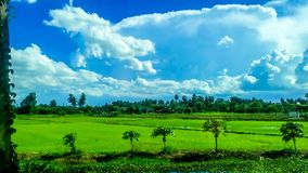 Grüne Reispaddys auf der Straße lizenzfreie stockfotografie