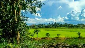 Grüne Reispaddys auf der Straße stockbilder