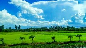 Grüne Reispaddys auf der Straße lizenzfreie stockbilder