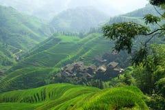 Grüne Reisterrasse in den Porzellan mountaines Stockbilder