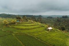 Grüne Reisterrassen in Bali lizenzfreies stockbild