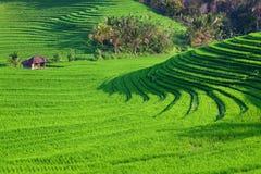 Grüne Reisterrassenlandschaft auf Bali-Insel Lizenzfreies Stockbild