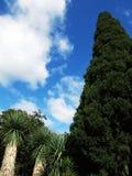 Grüne riesige Bäume mit blauem Himmel Stockfotografie