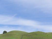 Grüne Rolling Hills und großer blauer Himmel stockbilder