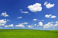 Grüne Rolling Hills unter blauem Himmel Stockfotografie
