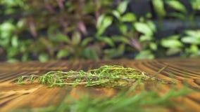 Grüne Rosmarinzweige, die auf Holztisch fallen Frischer Rosmarin für die Würze Wohlriechende Kräuter und Gewürze, die für würzen stock video