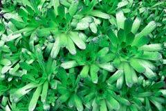 Grüne saftige Anlage nützlich als Hintergrund Lizenzfreies Stockfoto