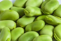 Grüne Samen der Puffbohne, Ackerbohne, Glocke Lizenzfreies Stockfoto