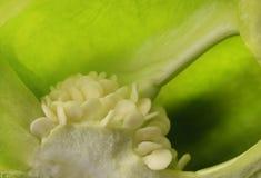 Grüne Samen grünen Pfeffers schließen oben Stockfotos