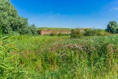 Grüne schöne Landschaftslandschaft Lizenzfreies Stockfoto