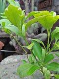Grüne Schönheit Lizenzfreie Stockfotos