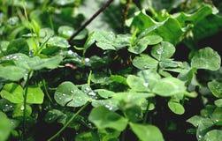 Grüne Schatten Stockbild