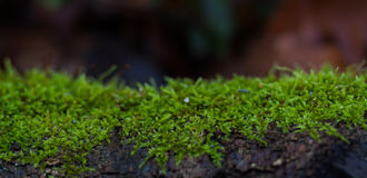 Grüne Schicht Moos lizenzfreies stockfoto