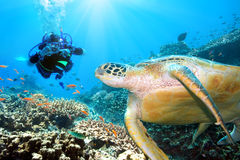 Grüne Schildkröte Unterwasser Lizenzfreie Stockfotos