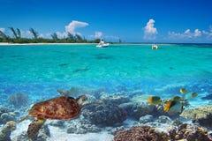 Grüne Schildkröte Unterwasser in Mexiko Lizenzfreies Stockfoto