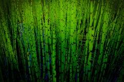 Grüne Schilfe Stockfotografie