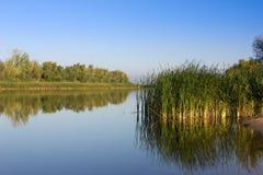 Grüne Schilfe auf der Flussbank Ruhiger Fluss am frühen Morgen stockfoto