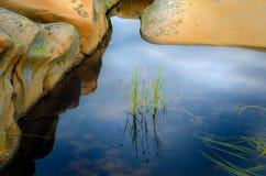 Grüne Schilfe im stillen Wasser Stockfoto