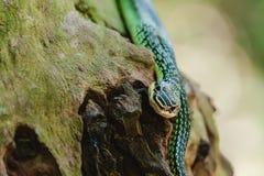 Grüne Schlange in der Natur lizenzfreie stockfotografie
