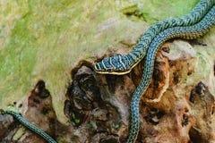 Grüne Schlange in der Natur stockfotos
