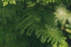 Grüne schlanke Blätter auf einem unscharfen Hintergrund stockfoto