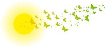 Grüne Schmetterlinge vor der Sonne für Grußkarten Lizenzfreie Stockbilder