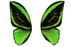 grüne Schmetterlingsflügel mit schwarzen Flecken Getrennt auf weißem Hintergrund Lizenzfreies Stockfoto