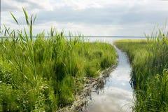 Grüne Segge auf Plesheev See Stockfotos